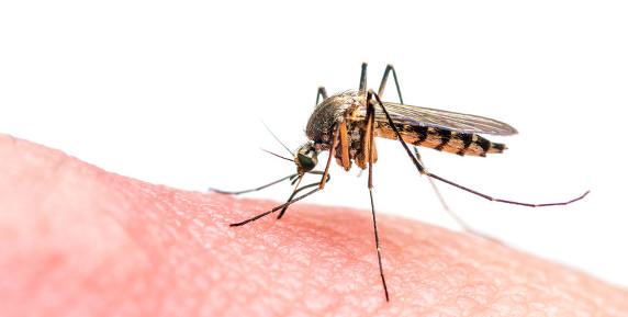 schutz vor insekten im haus was hilft wirklich. Black Bedroom Furniture Sets. Home Design Ideas